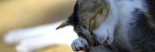 Les stars françaises contre la vente d'animaux en ligne et en animalerie