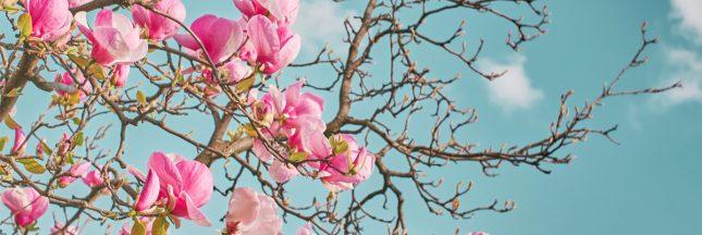 L'ailante: plante sauvage du bitume ou espèce invasive?