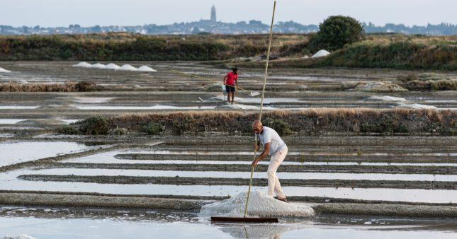 La Fleur de sel de Guérande, l'indispensable condiment