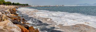 Le liga : une boue issue de la pollution qui menace poissons et pêche