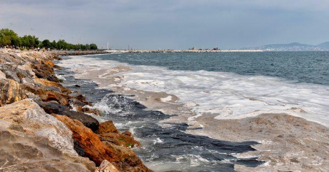 Le liga: une boue issue de la pollution qui menace poissons et pêche