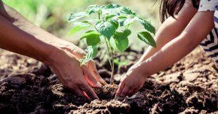 Législation - Tout ce qu'il faut savoir avant de planter un arbre