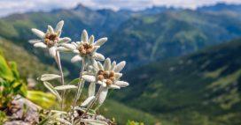 Biodiversité: les fleurs aussi sont en danger