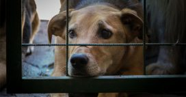 Loi contre la maltraitance animale: le Sénat rétropédale