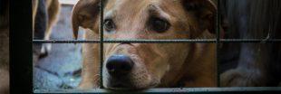 Loi contre la maltraitance animale : le Sénat rétropédale