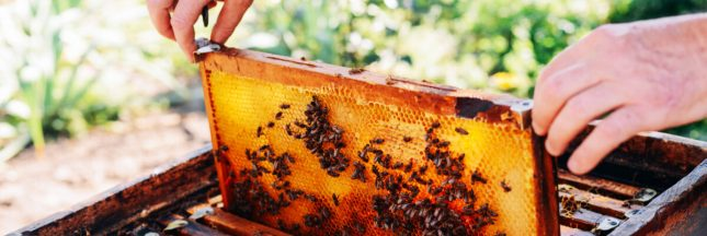 récolte de miel france