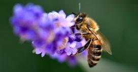 Plus d'un million de signatures en Europe pour sauver les abeilles