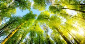 Comment les forêts d'Europe protègent du réchauffement climatique