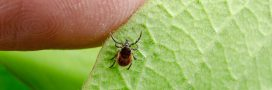 Bientôt un traitement efficace contre la maladie de Lyme?
