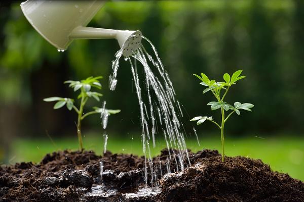economiser eau jardin