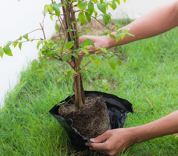 jardiner bio planter arbres