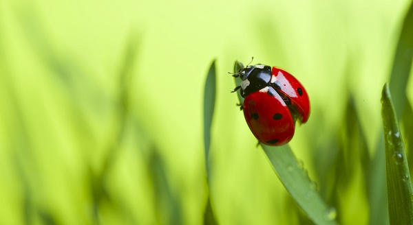 Jardiner bio 3 astuces - Desherbant naturel puissant ...