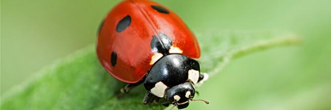 Quelques répulsifs et insecticides naturels
