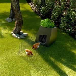 Les maladies des pelouses