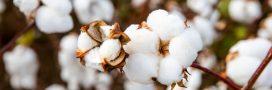 Coton équitable: à quels labels se fier?