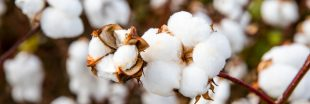 Coton équitable : à quels labels se fier ?