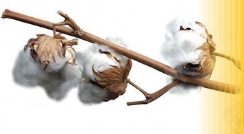 coton coton