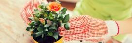 4 astuces bio pour embellir les plantes