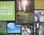 deforestation année de la foret