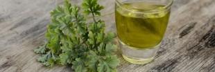 De l'absinthe dans le jardin contre les pucerons