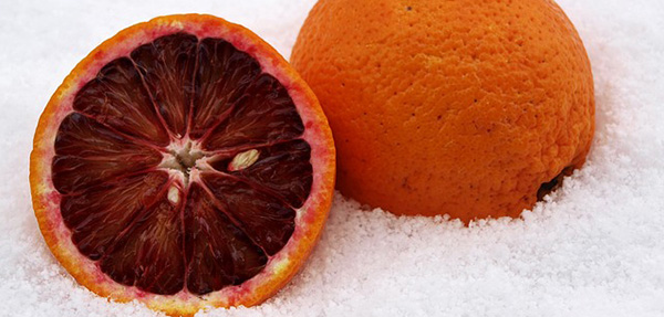 orange-sanguine-agrume-fruit