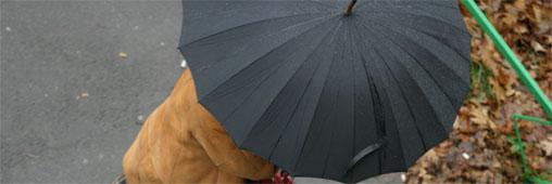 Parapluies. Un pépin pour l'environnement