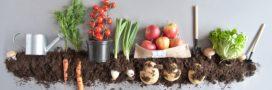 Alimentation bio: 5 bonnes raisons de tous s'y mettre