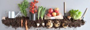Alimentation bio : 6 bonnes raisons de tous s'y mettre