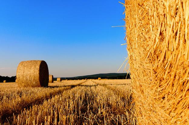 agriculture-biologique-cest-quoi