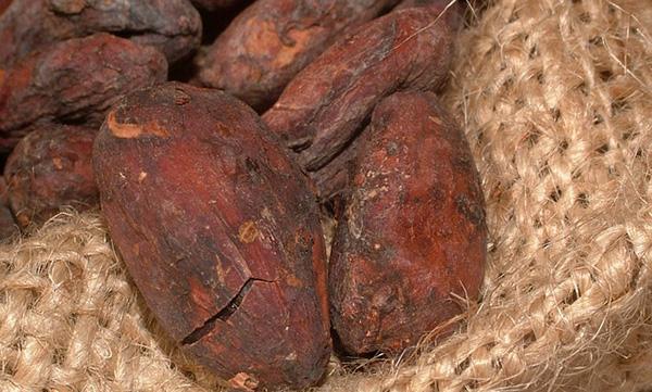 feves-cacao-chocolat-01