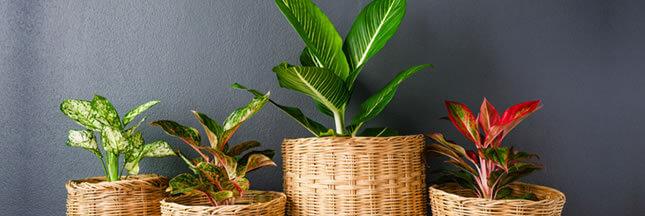 6 plantes dépolluantes vraiment efficaces pour votre intérieur