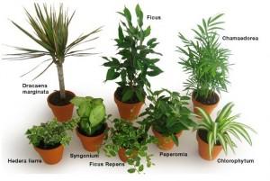 Quelques plantes dépolluantes