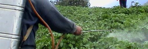 Pesticides et alimentation. La France mauvaise élève