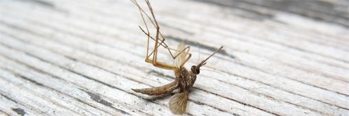 Maison et insecticide bio - Lutter contre les petites bêtes