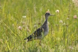biodiversité oiseaux