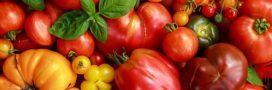 Tomate: l'incontournable fruit de l'été