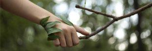 La phytothérapie: le soin nature