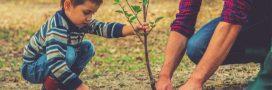Cet automne, je plante mon arbre fruitier!