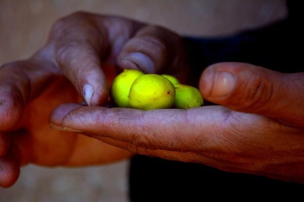atténuer les vergetures, huile d'argan