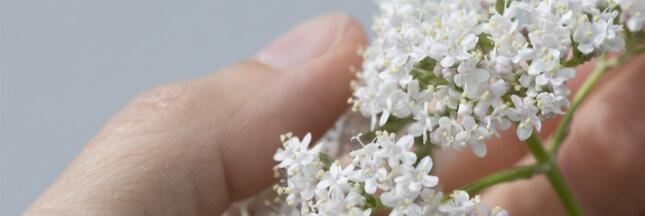 soigner stress plantes