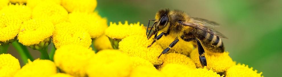 les abeilles en danger consoglobe. Black Bedroom Furniture Sets. Home Design Ideas