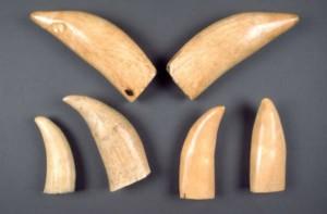 elephant-ivoire