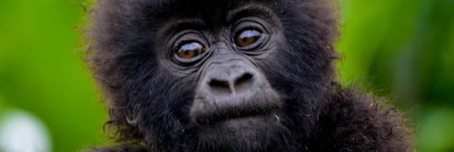 Les 10 espèces les plus menacées