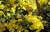 renforcer système immunitaire plantes griffe-de-chat