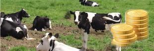 J'investis dans un troupeau de vaches