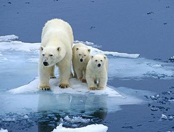 """Résultat de recherche d'images pour """"antarctique  ours blanc"""""""