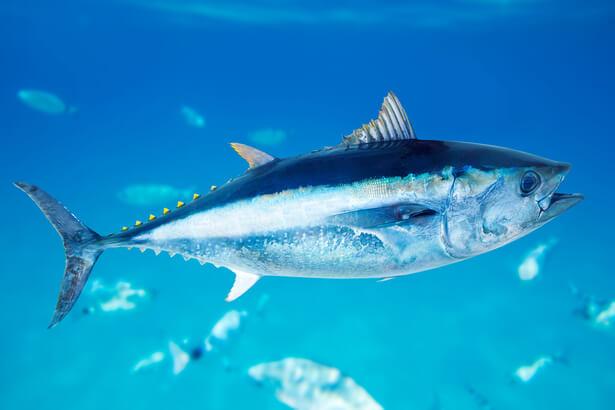 espèces les plus menacées
