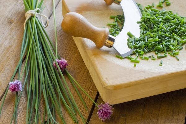 ciboulette-aromate-santé_shutterstock_146220863