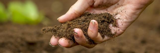 4 recettes de fertilisant naturel