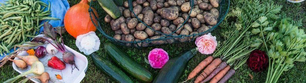 Tous au potager conseils en jardinage consoglobe for Conseil en jardinage